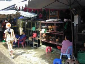 Vietnam-2001 135 20081223 2000276316