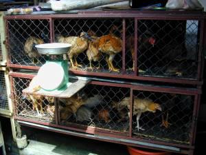 Vietnam-2001 136 20081223 1435166858
