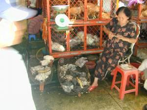 Vietnam-2001 138 20081223 1301464184