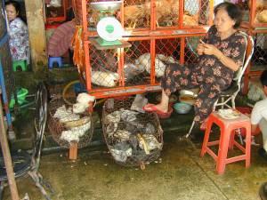 Vietnam-2001 139 20081223 1812060444
