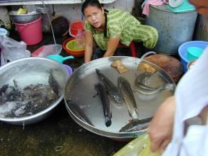 Vietnam-2001 141 20081223 1976269609