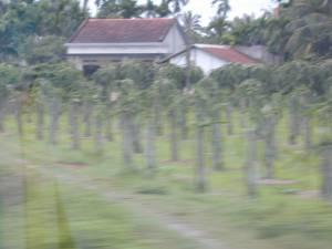 Vietnam-2001 218 20081223 1644122179