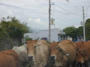 Vietnam-2001 50 20081223 1297594196